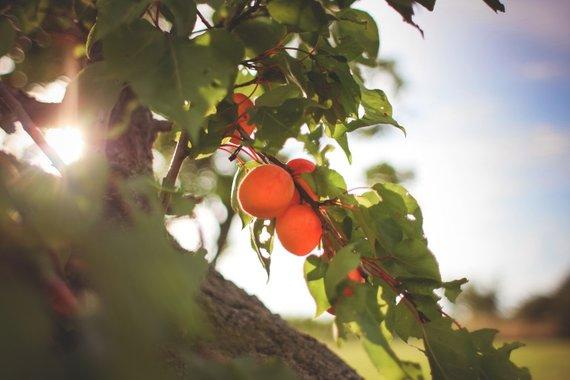 fertilisation d'arbre Sherbrooke