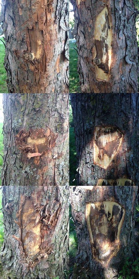 blessure tronc arbre