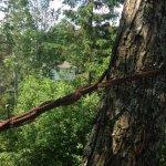 Haubanage d'arbre à Sherbrooke