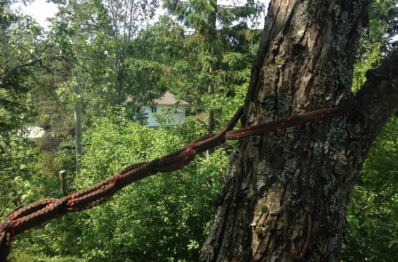 haubanage d'arbre Sherbrooke
