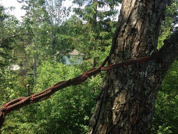 haubanage de branches dynamique