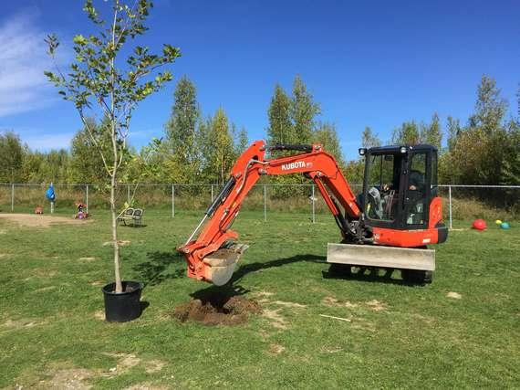 Plantation d'arbre à Sherbrooke