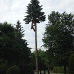 Abattage d'arbre à Sherbrooke