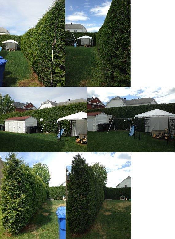 taille de haies de c dres vert tige arboriculture sherbrooke. Black Bedroom Furniture Sets. Home Design Ideas