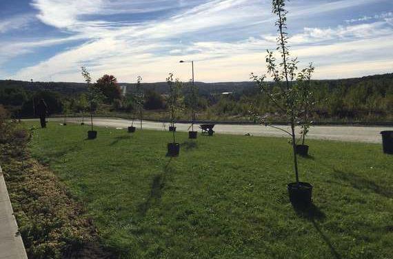 Plantation d'arbre