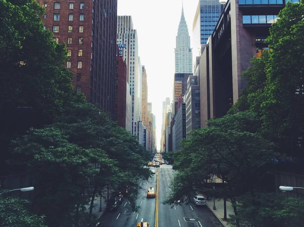 L'importance des arbres au niveau écologique
