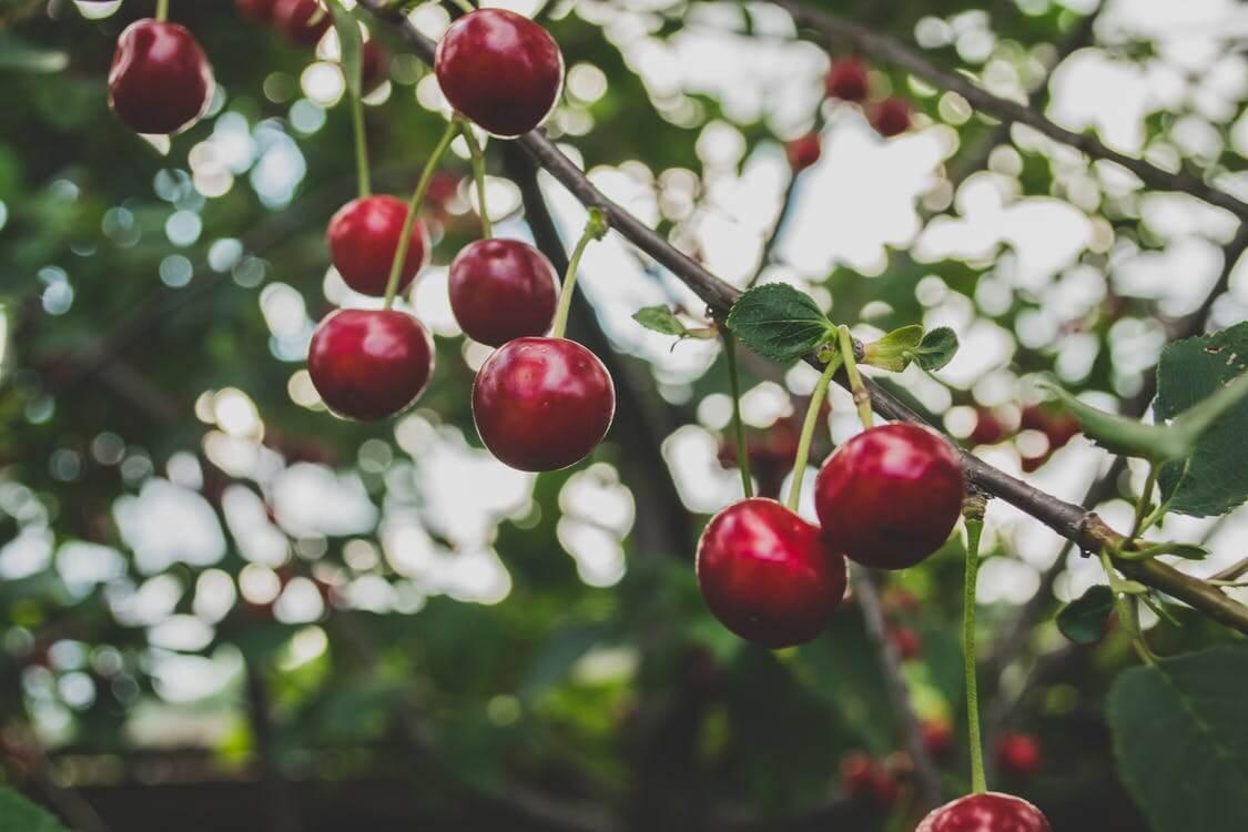 L'importance des arbres au niveau économique