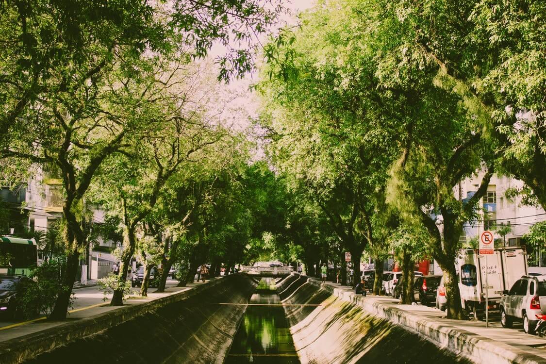 L'importance des arbres au niveau esthétique