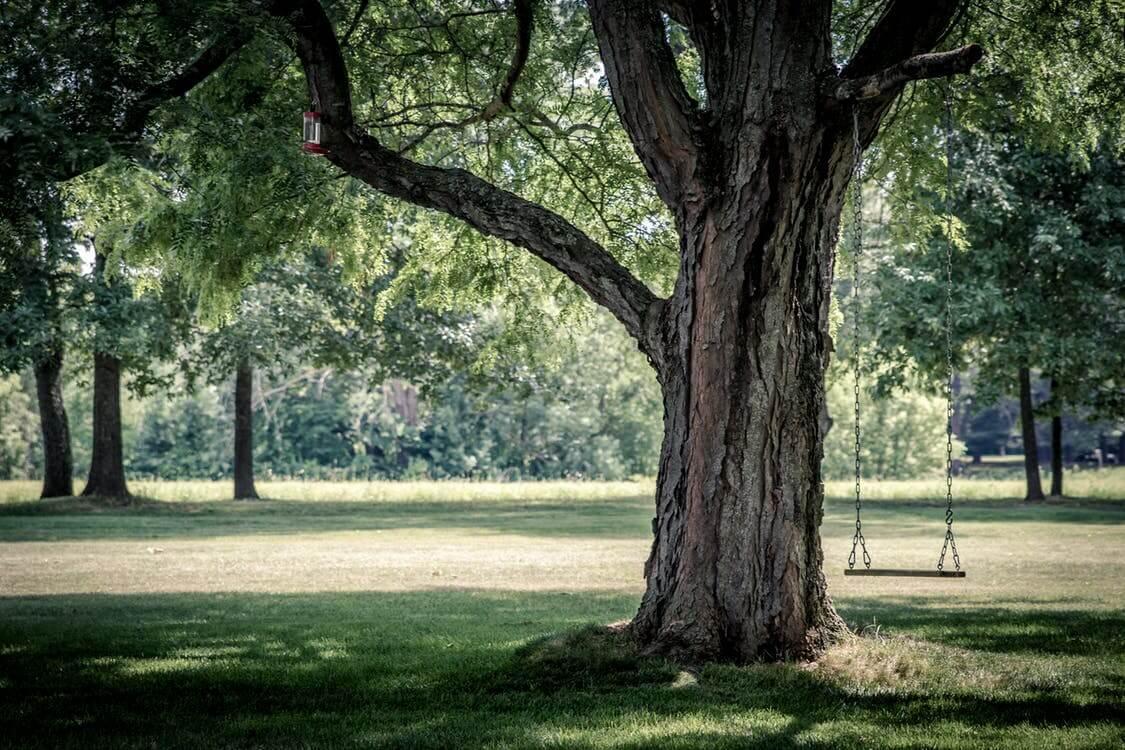 L,importance des arbres au niveau social