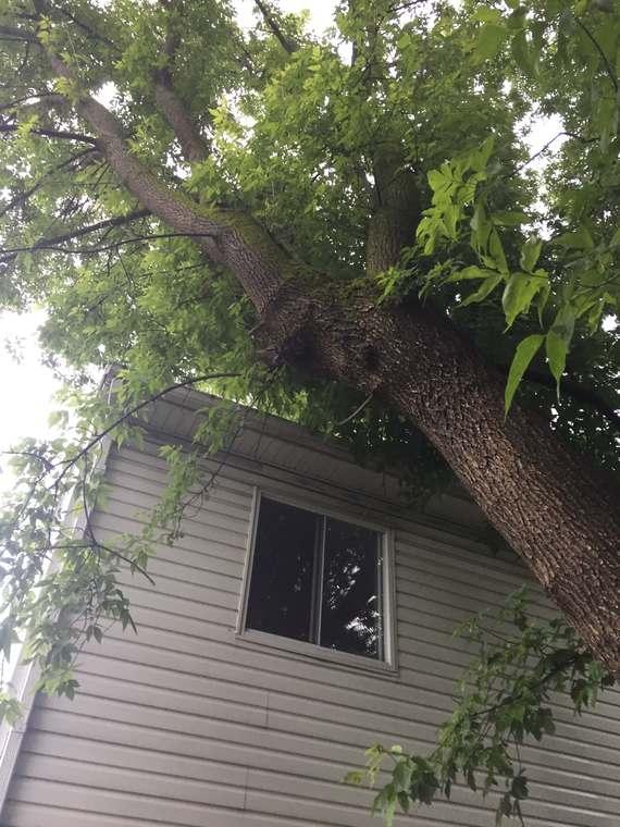 Émondage d'arbre nuisible