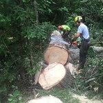 abattage d'arbre coupe d'arbre Sherbrooke