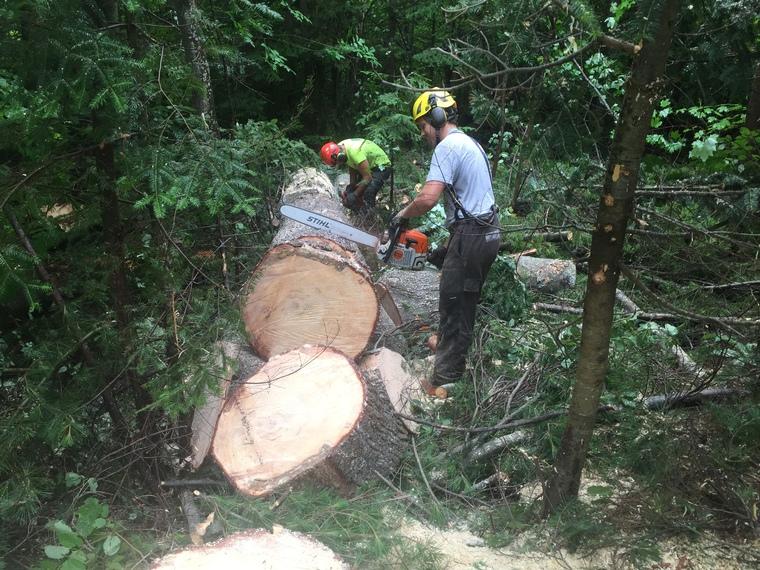 Abattage d'un arbre à Magog en Estrie