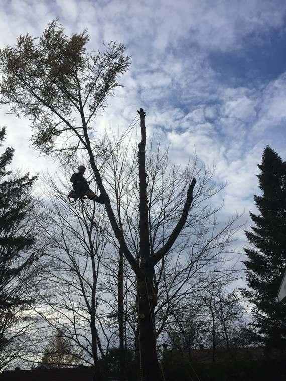 Abattage d'arbre dans le Nord de Sherbrooke