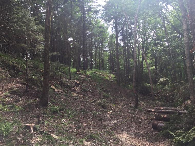 Déboisement et aménagement de forêt à Sherbrooke.