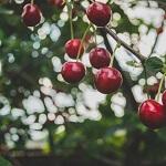fertilisation d'arbre et traitement de maladies Sherbrooke