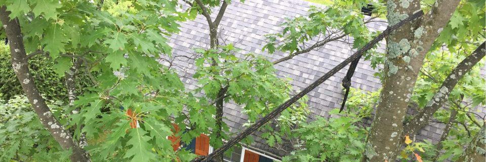 Haubanage de branches