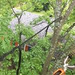 haubanage de branche Sherbrooke