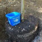 plantation d'arbre et haies de cèdres