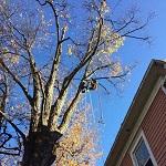 Élagage d'arbre à Sherbrooke
