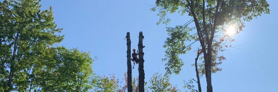 Abattage d'arbre, Coupe d'arbre