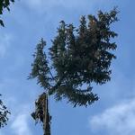 Abattage d'arbre Sherbrooke
