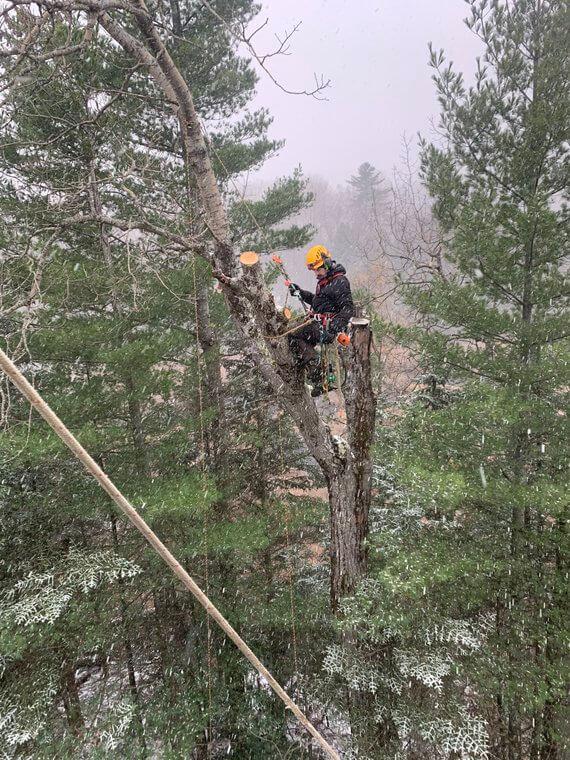 abattage d'arbre estrie