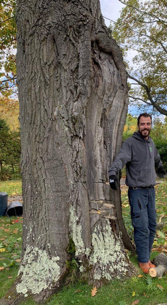 Élagage d'arbre en Estrie