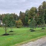 Plantation d'arbre Sherbrooke